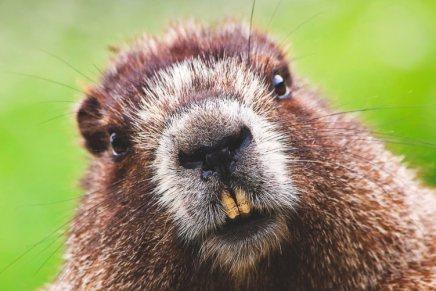Ubuntu Bionic Beaver 18.04 LTS usará Xorg por defecto
