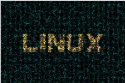 La importancia de elegir un hosting Linux